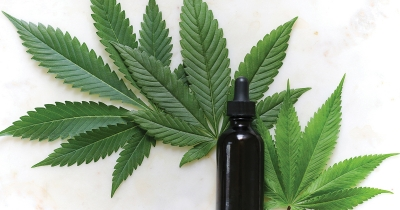CBD Oil: Are the Health Benefits Worth It?